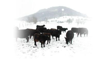 news_winter_herde